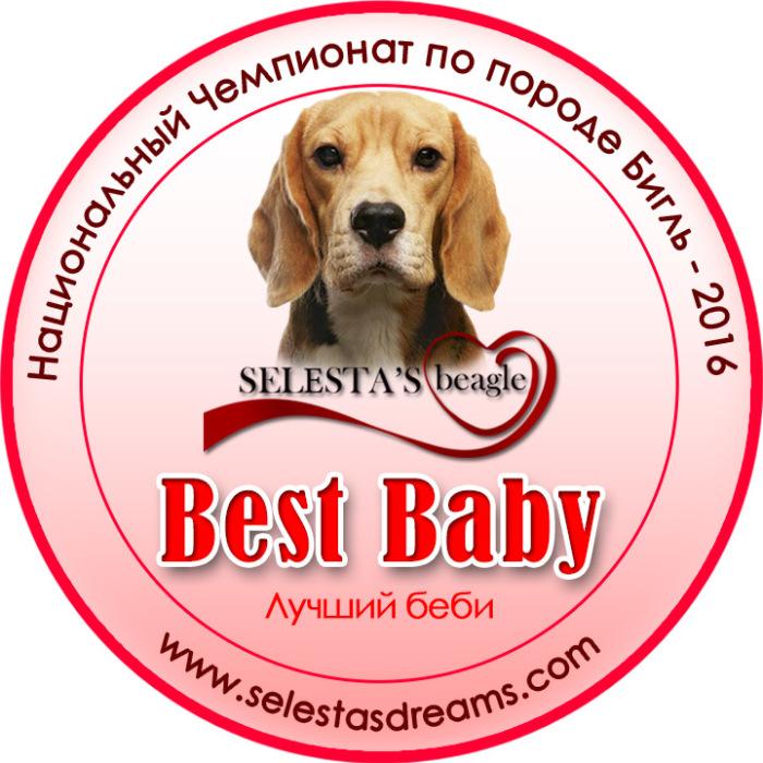 серединка-бигль-чемп2016-selesta-б